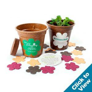 Flower Confetti Planting Kit - CFPK
